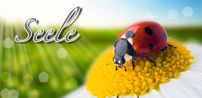 logo_seele